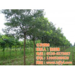 贵州国槐苗,亿发园林(在线咨询),国槐苗木求
