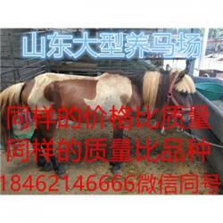 赣州马具用品那里的羊驼便宜